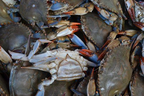 seafood crustacean shellfish