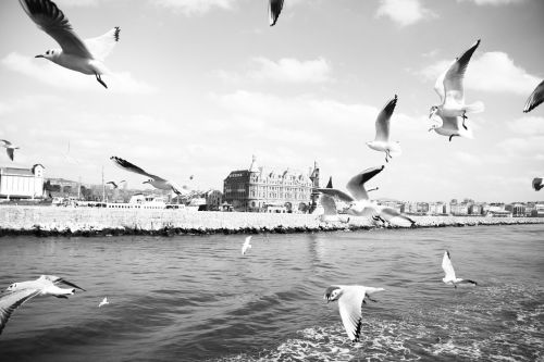 seagull ks marine