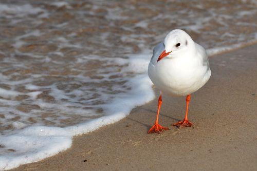 seagull beach baltic sea