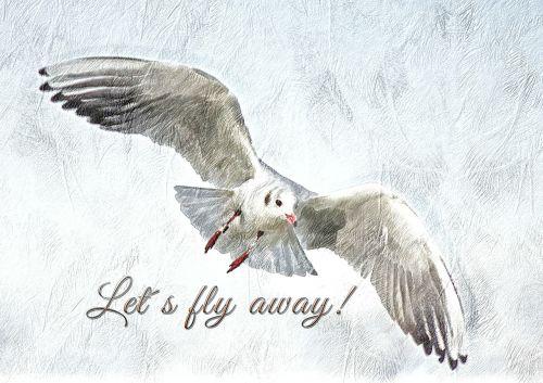 seagull nature bird