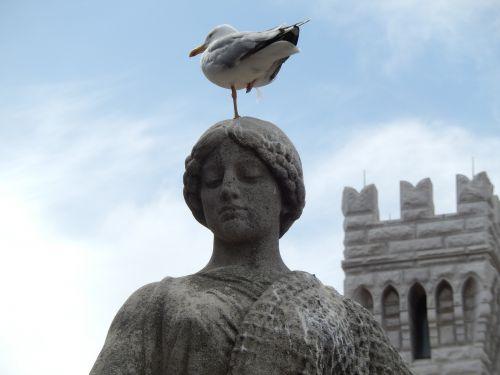 seagull stature monte carlo