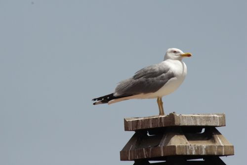 seagull sardinia meditation