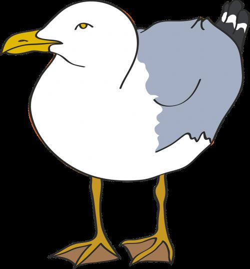 seagull bird beach
