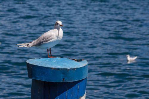 seagull bird pile