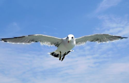 seagull jeju island udo