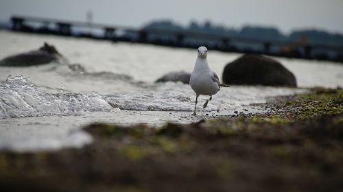 seagull fun snapshot