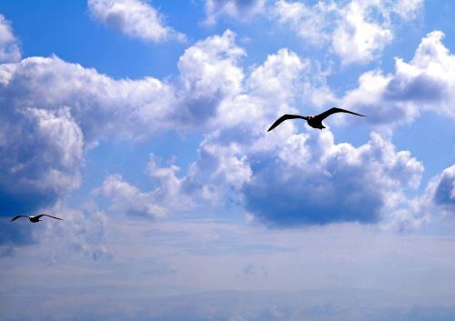 seagull istanbul clouds