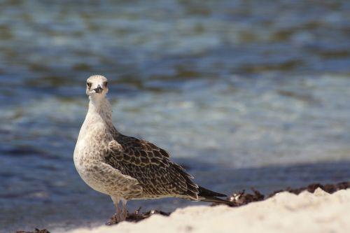 seagull beach seaweed