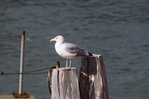 seagull staten island new york