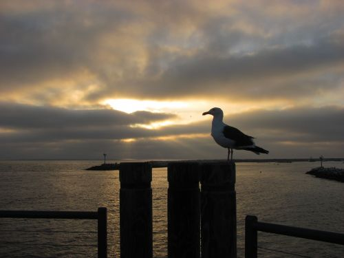 seagull sunset pier