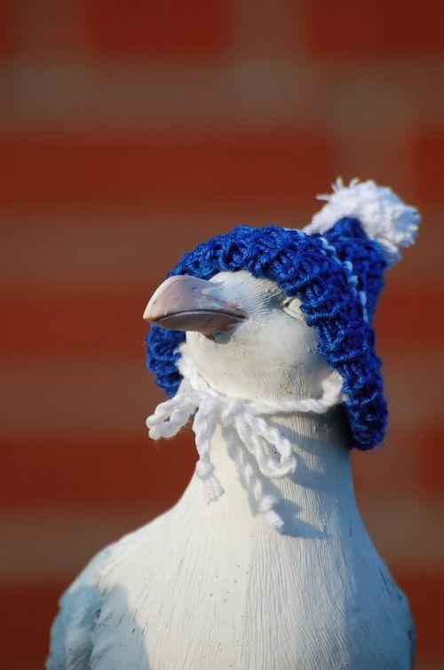 seagull cap cheeky