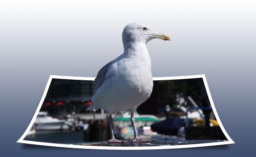seagull bird polaroid