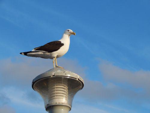 seagull lamp bird