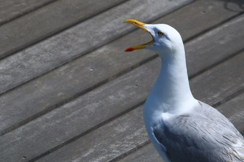 seagull cry port