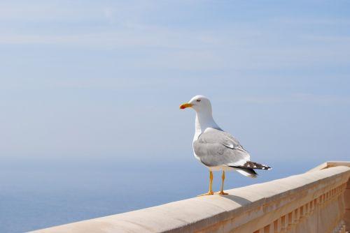 seagull sea spain