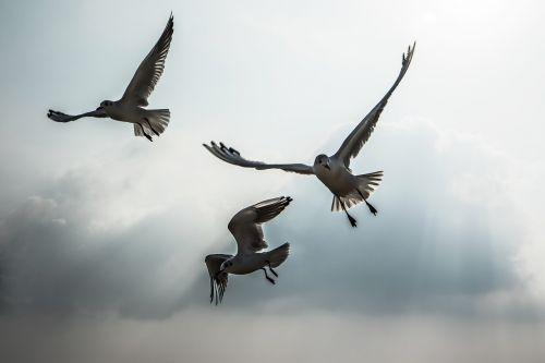 seagull new beach