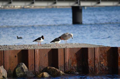 seagull bird seevogel