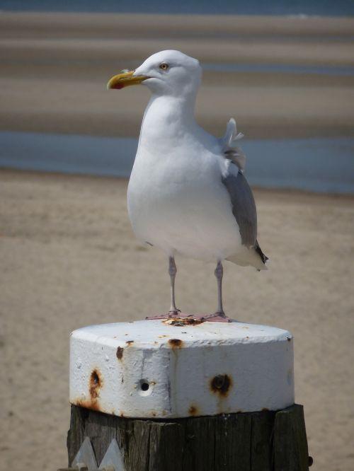 seagull beach sea