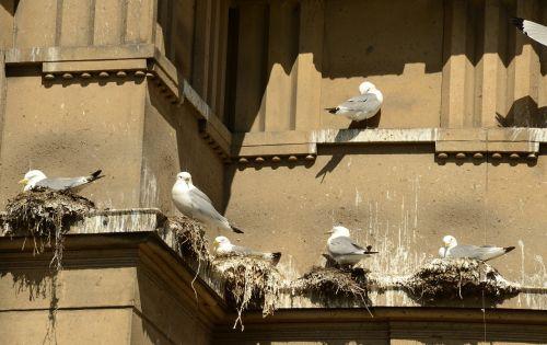 seagull bird hatch