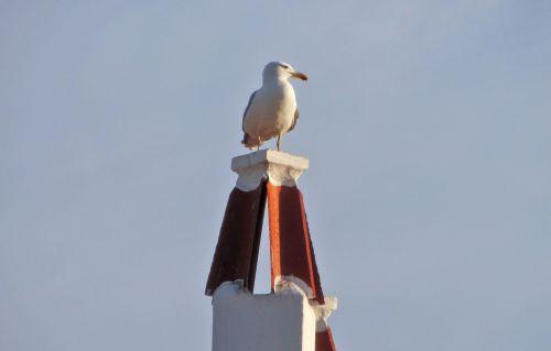 seagull bird ave