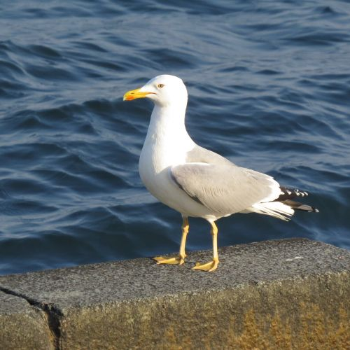 seagull quay sea