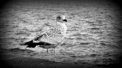 seagull beach the baltic sea