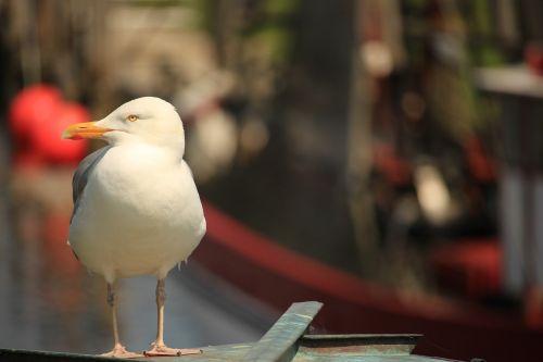 seagull lake bird