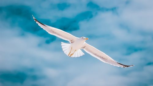 seagull portugal algarve