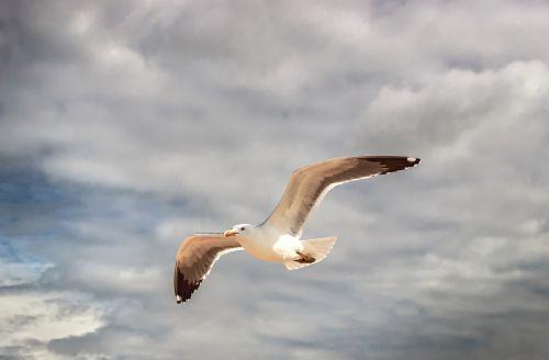 seagull algarve portugal