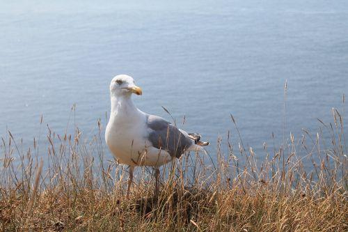seagull animal wait