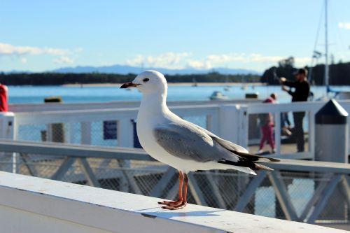 seagull animal sea