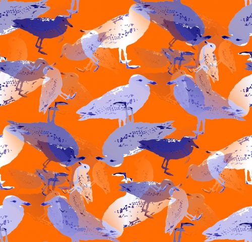 seagull gulls coastal bird