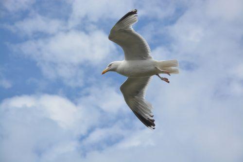 seagull stolen flight birds