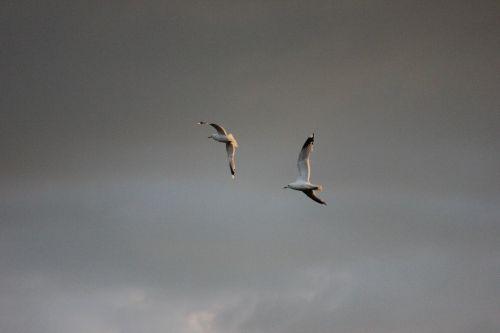 seagull logs bird