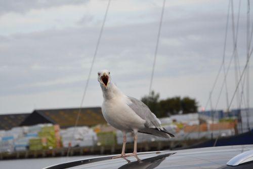 seagull port water sea