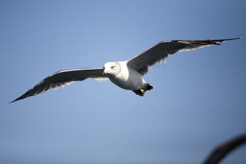 seagull sea birds new