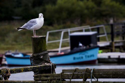 seagull post and rail river estuary