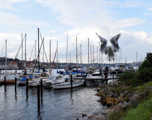 seagull flight port