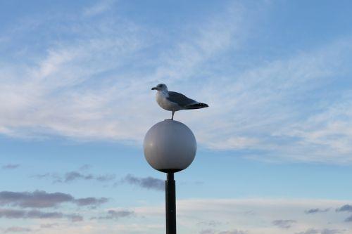 seagull sky water