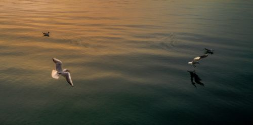 seagull calm sea tranquility