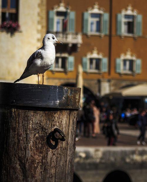 seagull seevogel water bird
