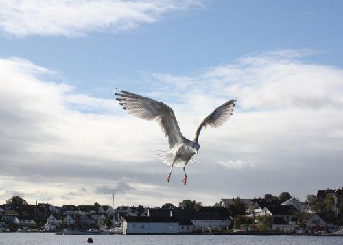 seagull bird marine life