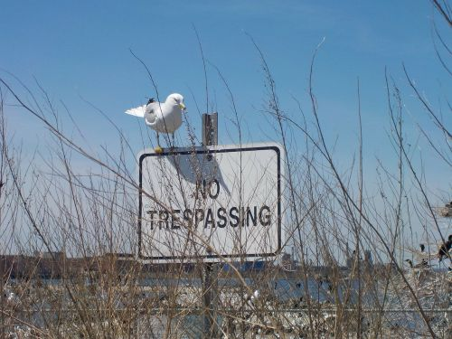 seagull sign no trespassing