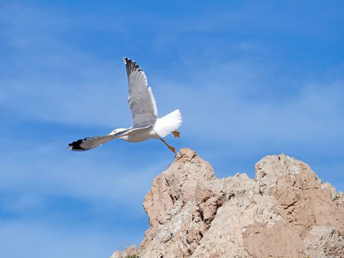 seagull  cala ratjada  mallorca