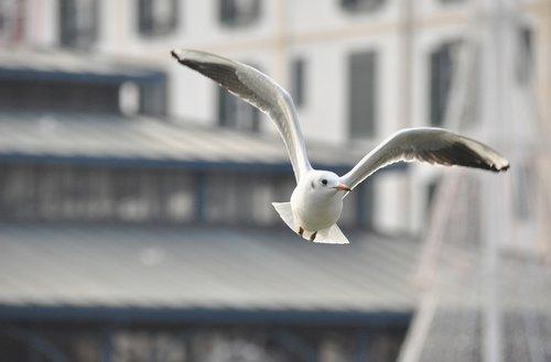 seagull  bird  city
