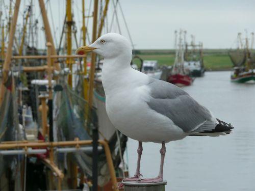 seagull bird port