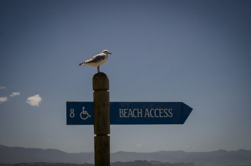 seagull poster disabled