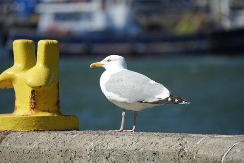 seagull  port  quay wall