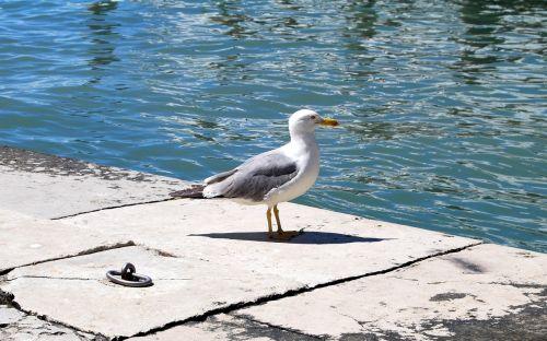 seagull sea water