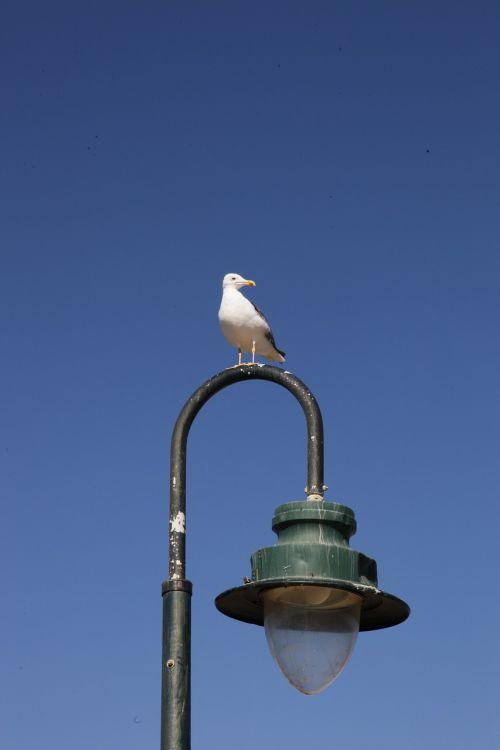 seagull street lamp cadiz